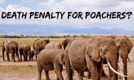 Death penalty for poachers?