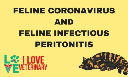 Feline Coronavirus and Feline Infectious Peritonitis