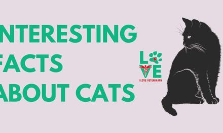 Interesting facts about cats
