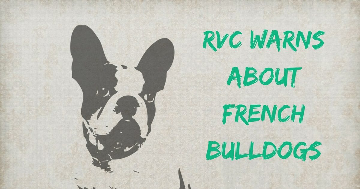RVC warns about French Bulldogs