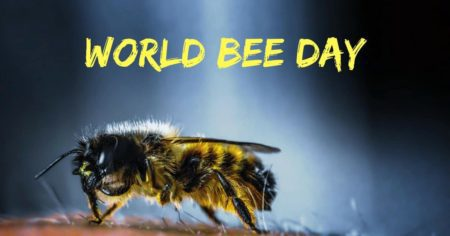 World Bee Day – May 20