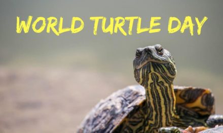 World Turtle Day – May 23