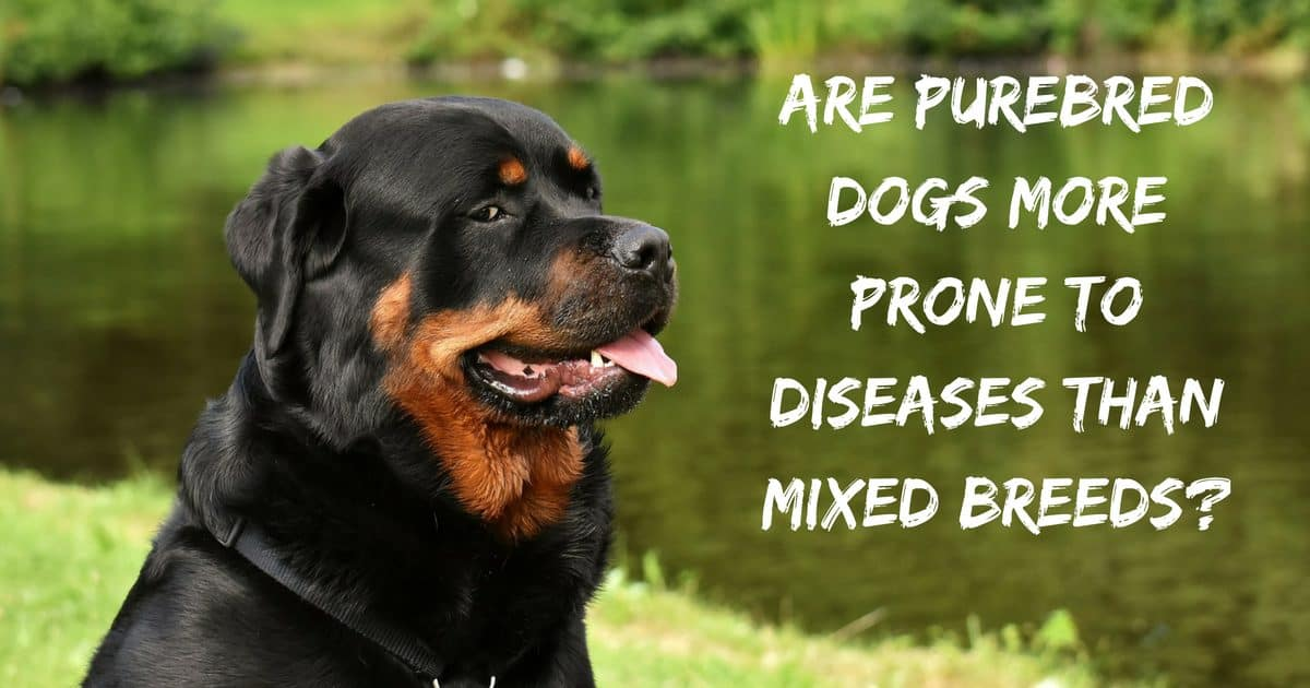 Are purebred dogs more prone to diseases than mixed breeds?
