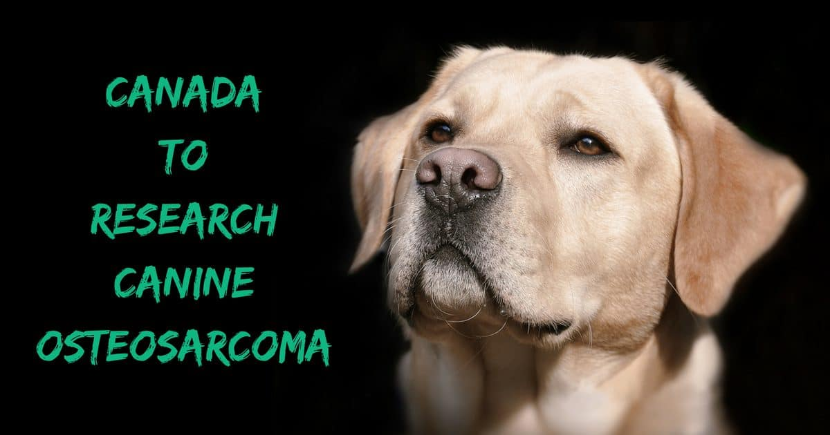 Canada to Research Canine Osteosarcoma