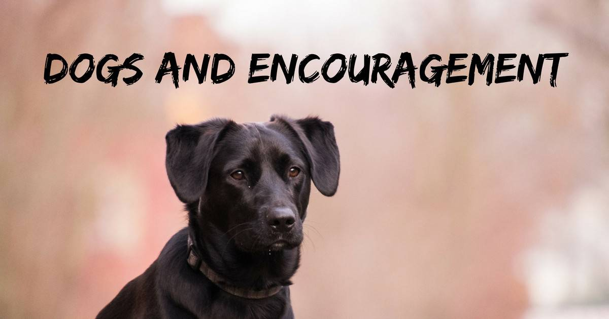 Dogs and encouragement