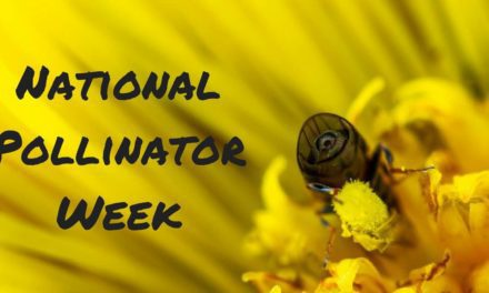 National Pollinator Week – June 17-23