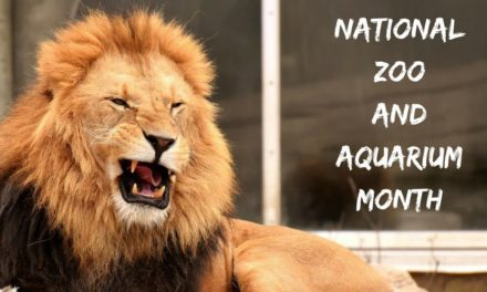 National Zoo and Aquarium Month – June