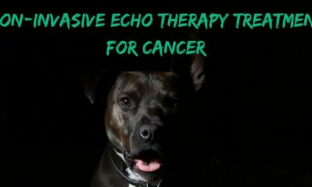Non-invasive echo therapy treatment for cancer