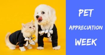 Pet Appreciation Week – June 7-13 2020