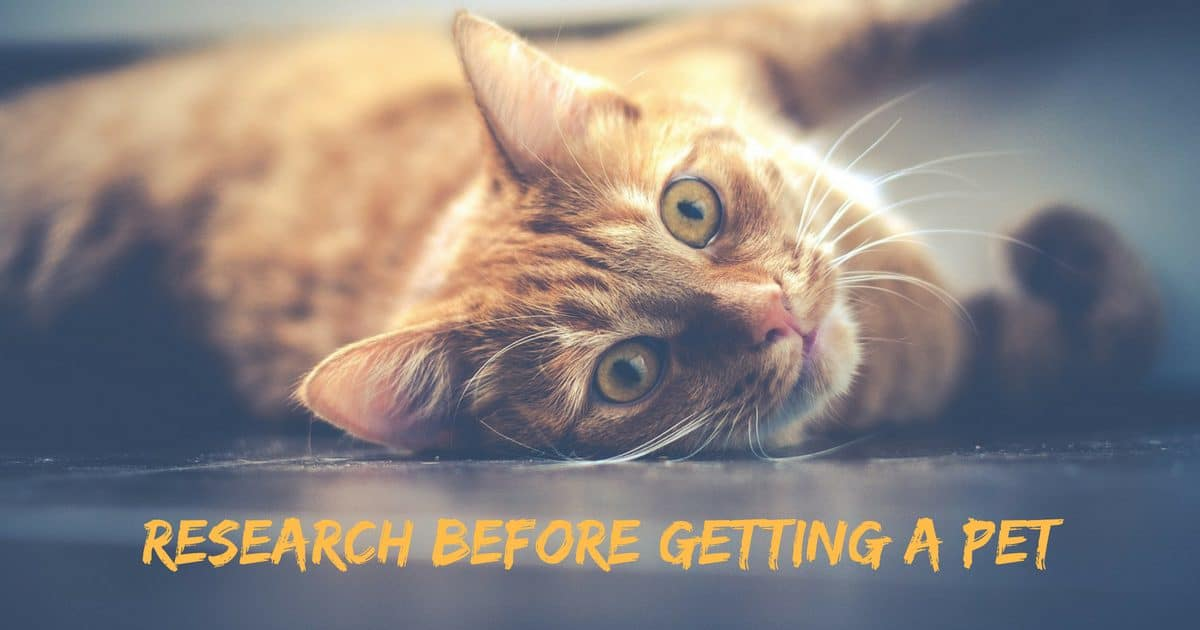 Research before getting a pet