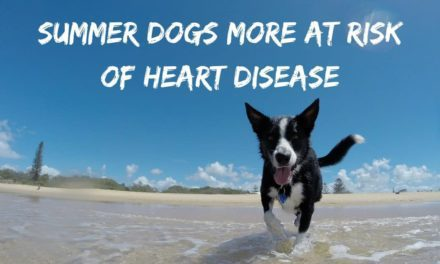Summer dogs more at risk of heart disease