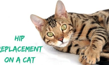 Hip Replacement on a Cat