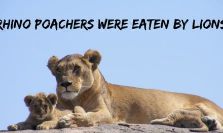 Rhino Poachers Were Eaten by Lions
