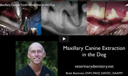 Maxillary Canine Tooth Extraction in the Dog – Video by Dr. Brett Beckman