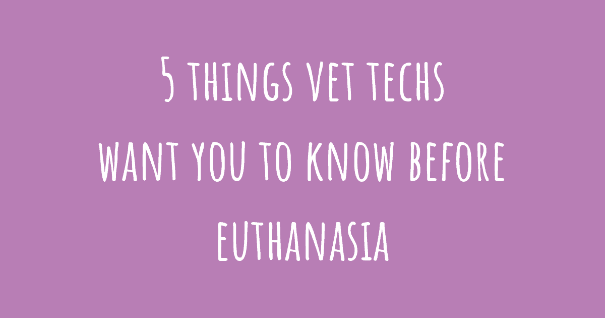 5 things vet techs want you to know before euthanasia