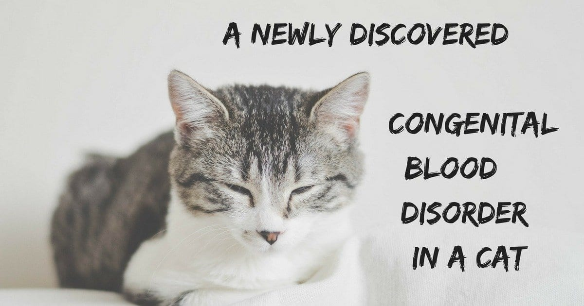 A newly discovered congenital blood disorder in a cat