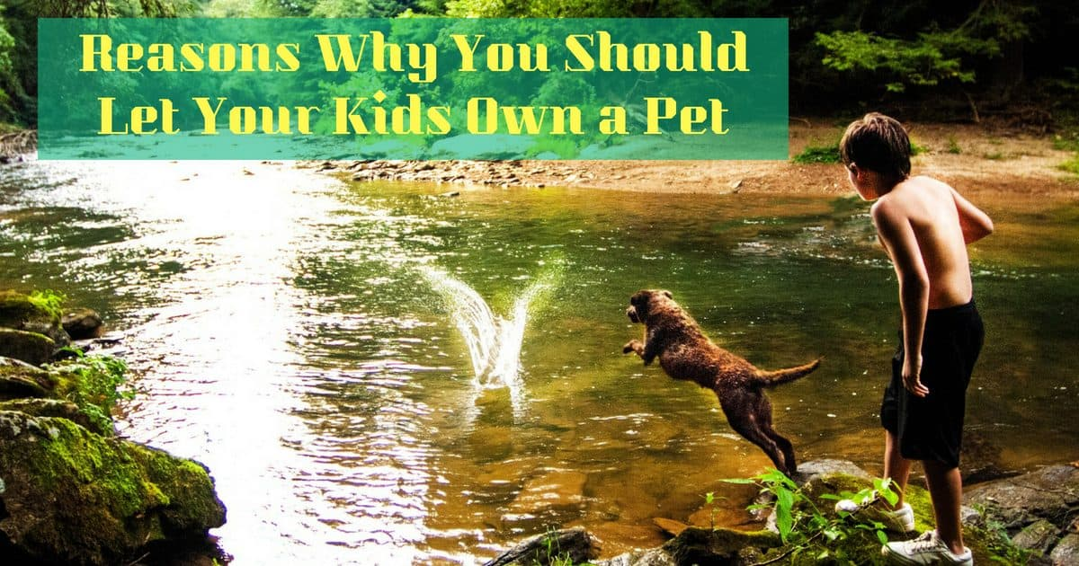 Reasons Why You Should Let Your Kids Own a Pet