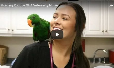 Morning Routine Of A Veterinary Nurse – Video by Victoria Birch