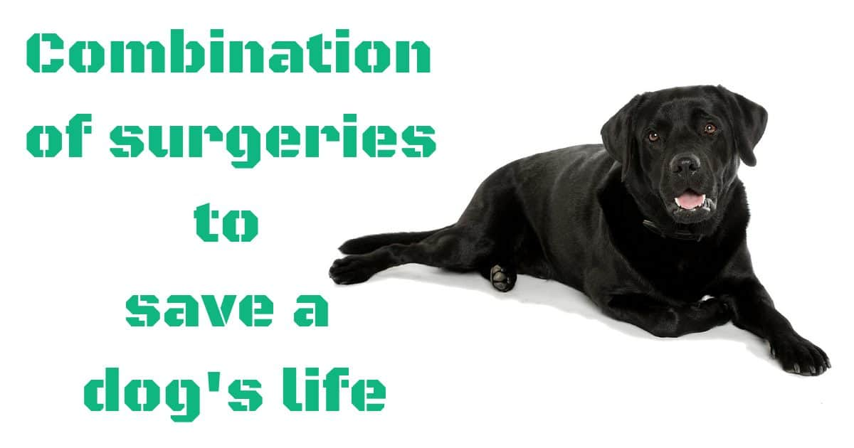 Combination of surgeries to save a dog's life