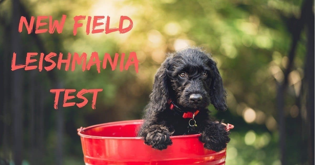 New Field Leishmania Test