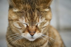 sleepu cat, Animal Pain Awareness Month