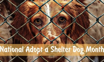 National Adopt a Shelter Dog Month – October 2020