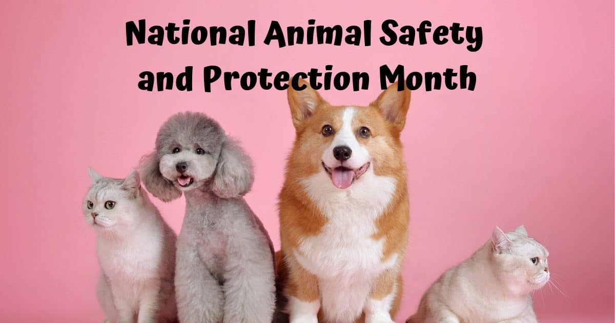 National Animal Safety and Protection Month – October 2019
