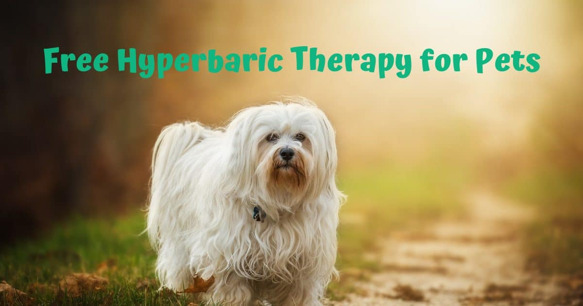 Free Hyperbaric Therapy for Pets