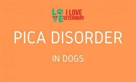 Pica Disorder in Dogs