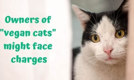 """Owners of """"vegan cats"""" might face charges"""