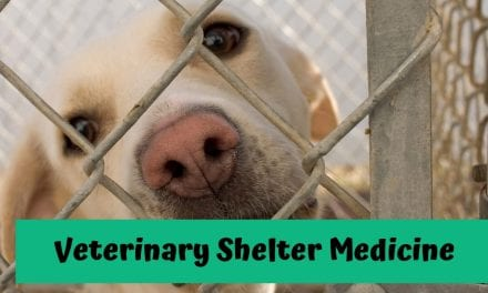 Veterinary Shelter Medicine