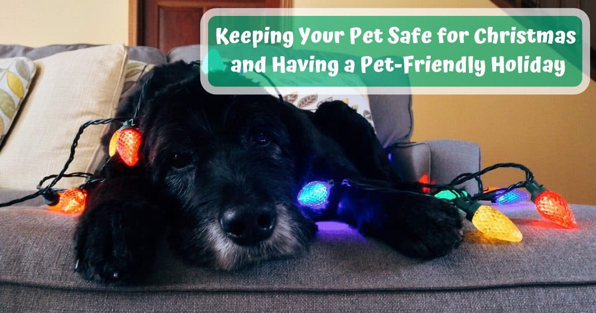 Keeping Your Pet Safe for Christmas and Having a Pet-Friendly Holiday