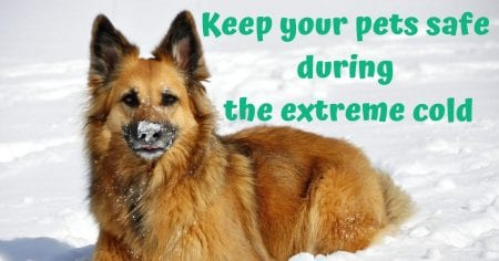 Keep your pets safe during the extreme cold