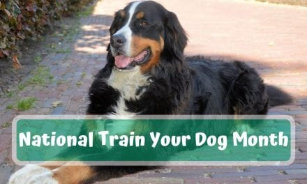 National Train Your Dog Month – January