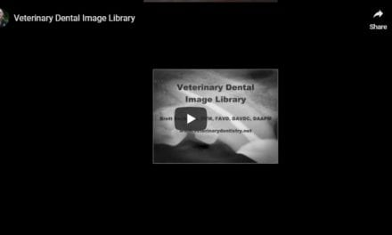 Veterinary Dental Image Library – Video by Dr. Brett Beckman