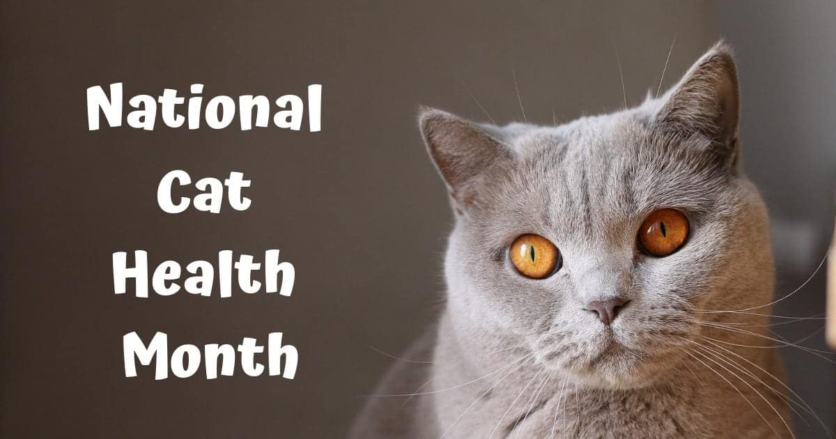 National Cat Health Month – February 2020