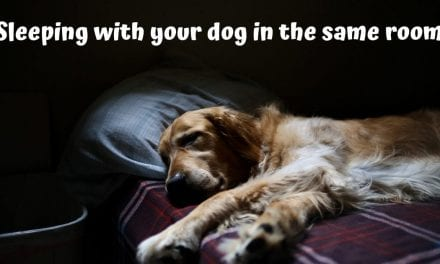 Sleeping with your dog in the same room