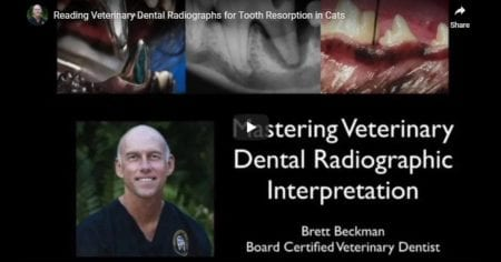 Radiographs for Tooth Resorption in Cats – Video by Dr. Brett Beckman