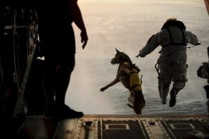 dog and an army officer jump from a plane