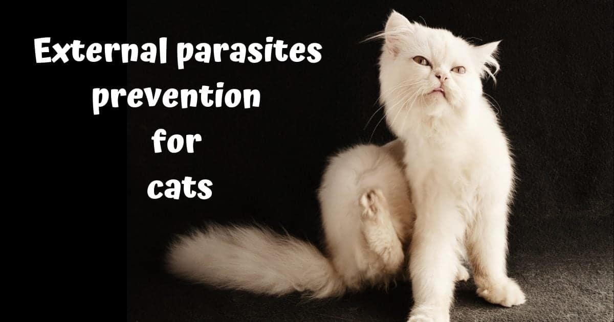 External parasites prevention for cats