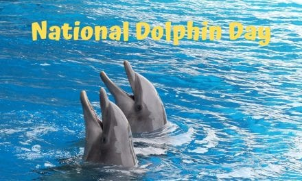National Dolphin Day – April 14