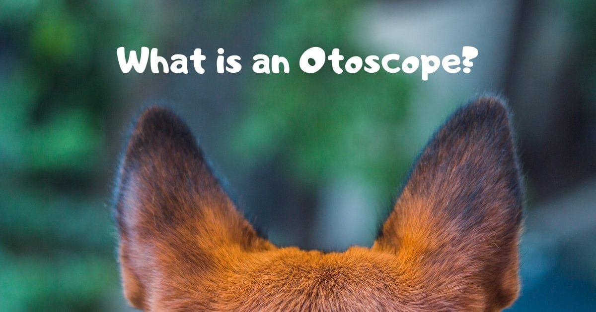 What is an Otoscope?