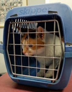cat in a carrier