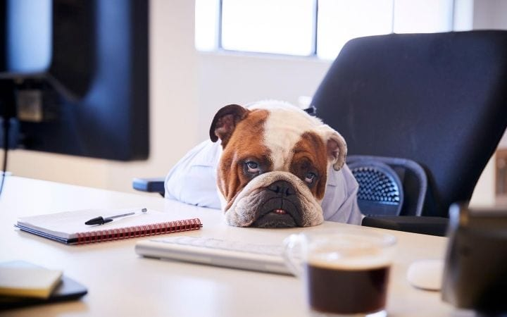 bored dog on a desk, by I Love Veterinary