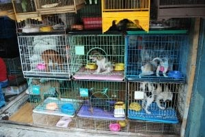 pupies in cages in a puppy mill