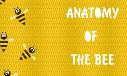Anatomy of the bee