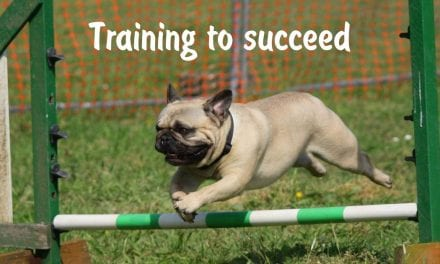 Training to succeed