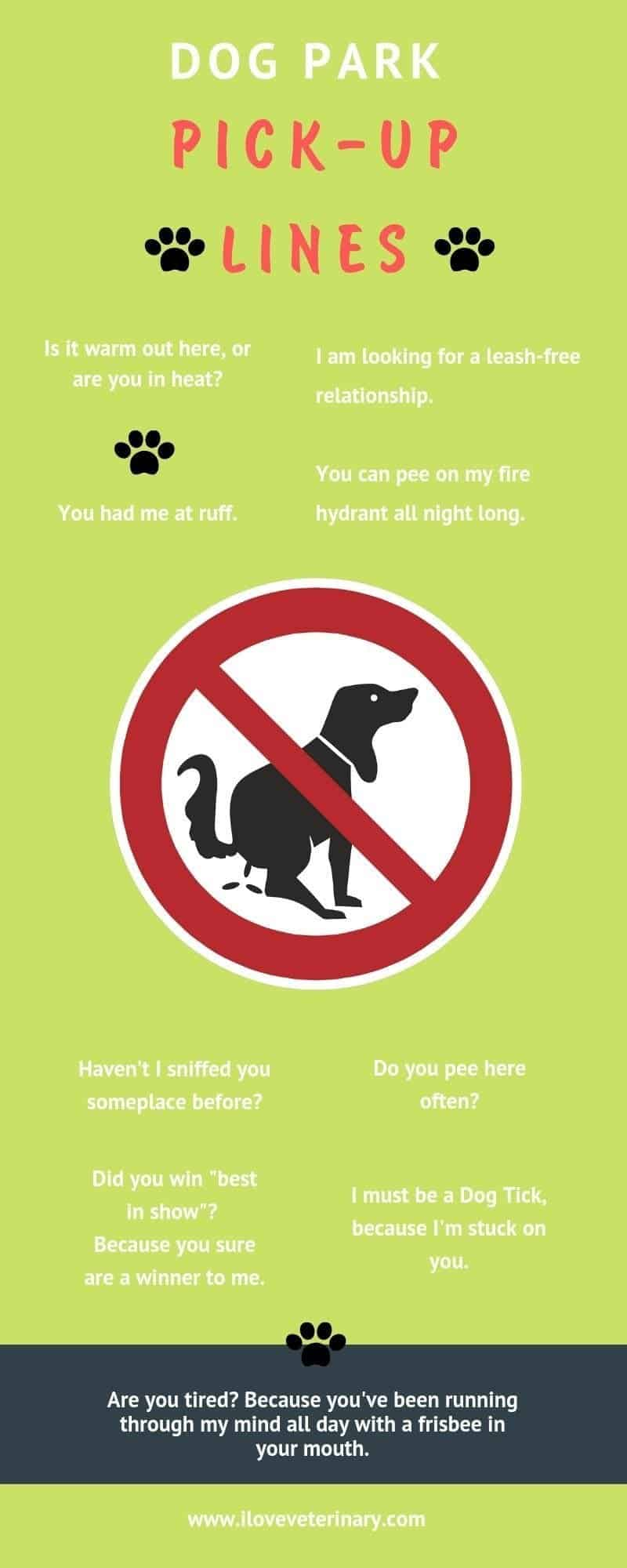 dog park pick up lines infographic I Love Veterinary