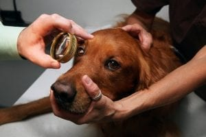 Veterinary Ophthalmologists
