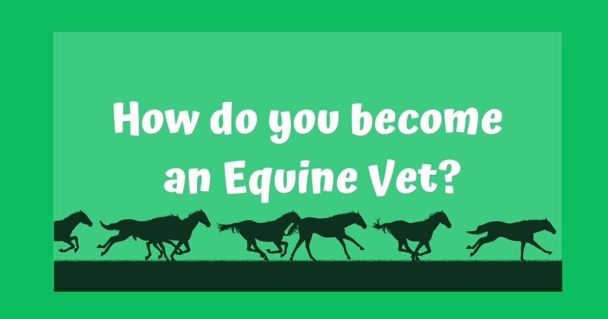 How do you become an Equine Veterinarian?